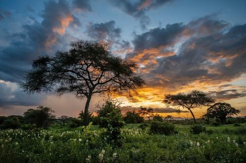 Tanzánie - Pavel Svoboda
